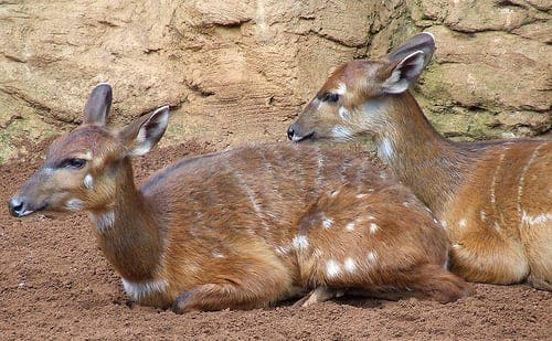 Junta announces cull of 1,767 natural park deer