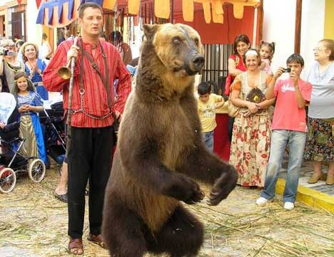 Dancing bears in Spain cause public outcry
