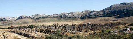 Los Merinos near Ronda
