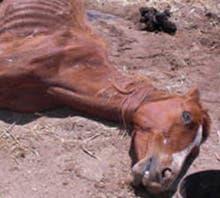 Dead horse