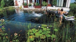 An ecological natural pool