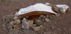 The body of a horse wrapped in tarpaulin