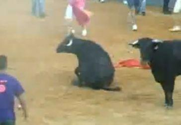 Bull tortured to death in Spain