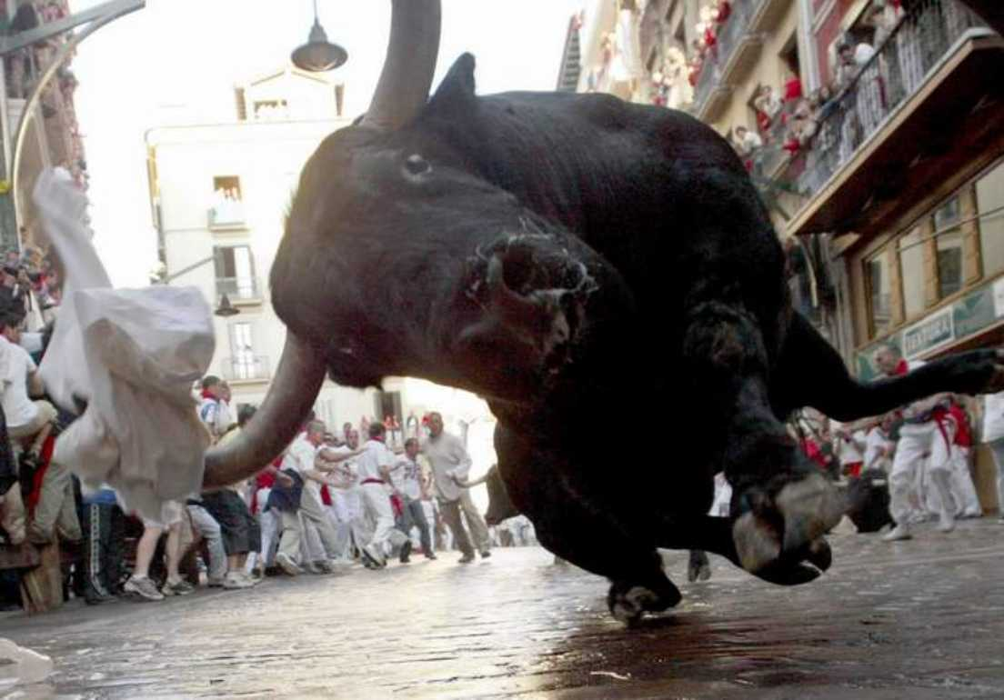 A bull from the Pamplona bull run