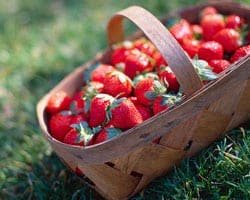 strawberry_basket