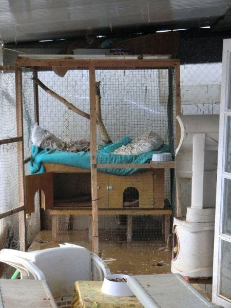 Cats and dogs drown in Mijas rescue centre flood