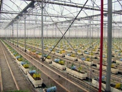 Almería's greenhouses: What goes on inside…