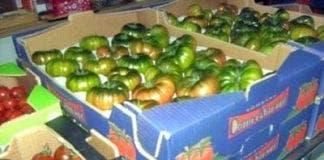 almeria tomatoes