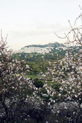 Andalucia's white villages turn pink