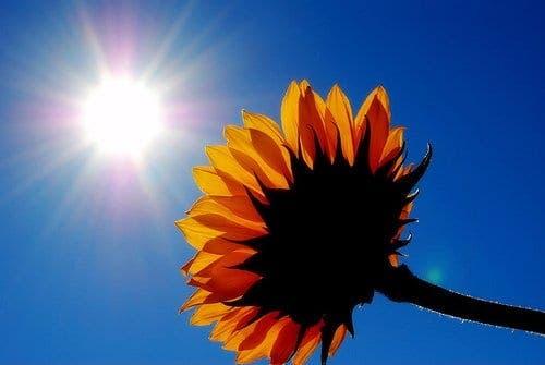 http://www.theolivepress.es/wp-content/uploads/2011/02/sunshine.jpg