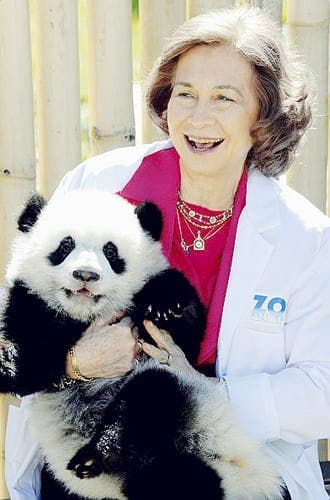 Panda-ing to the Queen of Spain