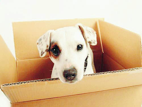 Restrictions on pet transport back to UK finally removed