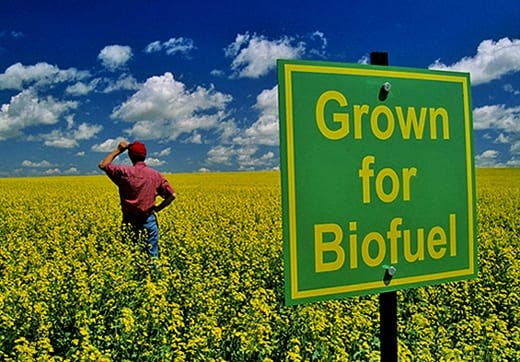 Biofuel bother for airlines