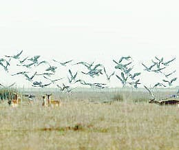 Birds at Donana national park