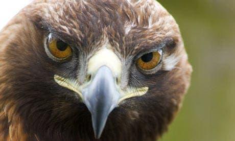 Eagle attacks expat on Costa del Sol