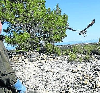 Regal ending for Spanish bird of prey