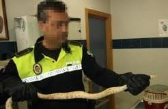 snake found sent in lunchbox in spain