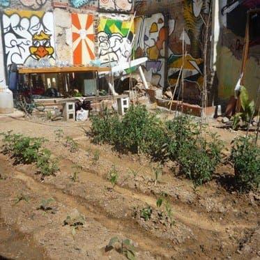 Urban garden movement blooms in Spain