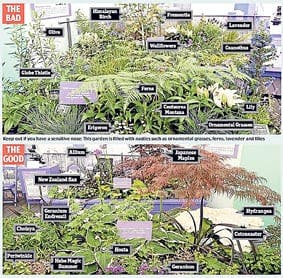 Chelsea garden not to be sneezed at