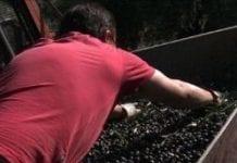 Olive farmer in Spain e