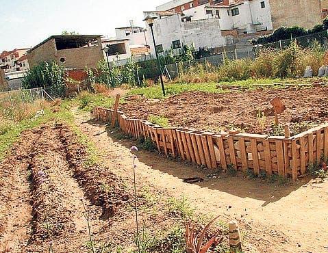 Urban garden movement booms in southern Spain