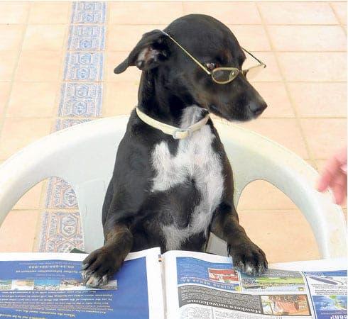 Bono reads the Olive Press