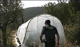 marijuana farm alicante