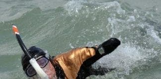 quadruple amputee completes km swim from Spain to Morocco