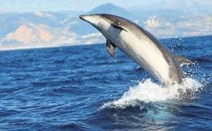 The Mediterranean is a key migration path for whales