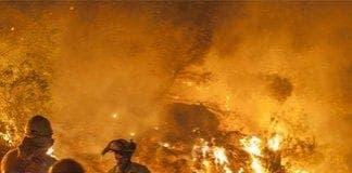 bedar wildfire e