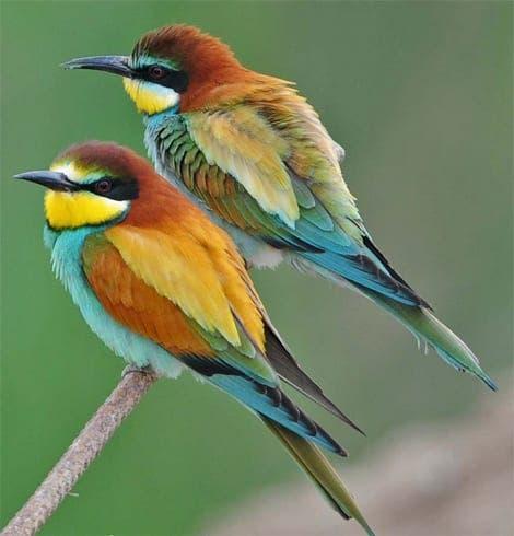 Andalucia dubbed a birdwatcher's paradise