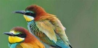 birdwatching andalucia