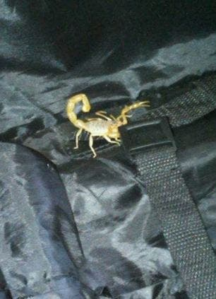 Brit finds deadly scorpion in suitcase following holiday in Almeria
