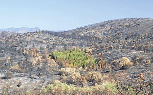 'Fireproof' trees survive blaze in Valencia