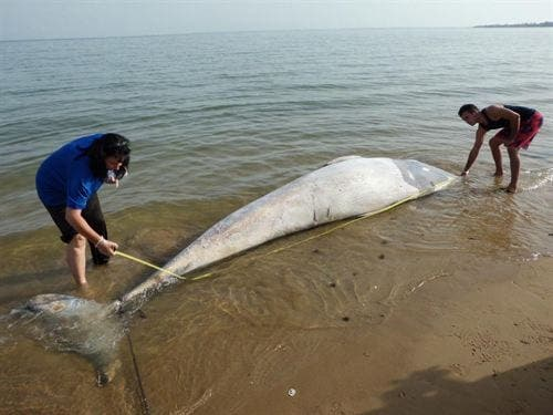 Baby whale found dead on Cadiz beach