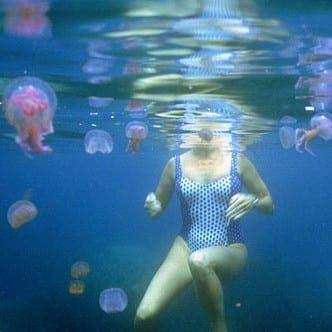 Phone app to combat jellyfish peril on Costa del Sol