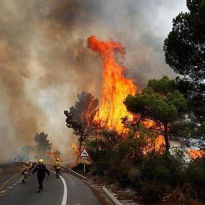 Reforestation of Costa del Sol must wait a year