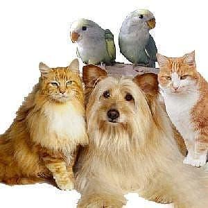 New pet association on the Costa del Sol