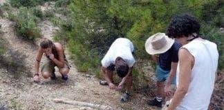 bones of hadrosaurs found in cataluna