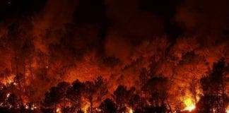 forest fires in andalucia destroy hectares in summer