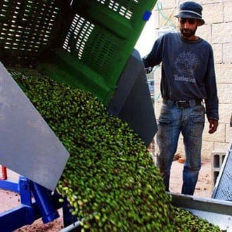 Olive oil costs soar due to drought in Spain