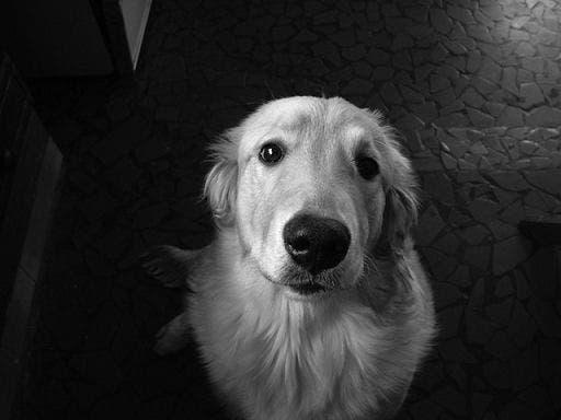 Expat dog death disgrace on Costa del Sol