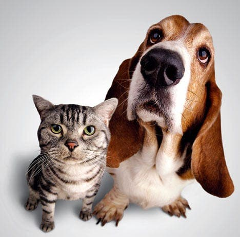 Treat your pets on International Animal Day