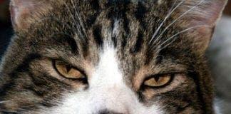 cats ruling humans e