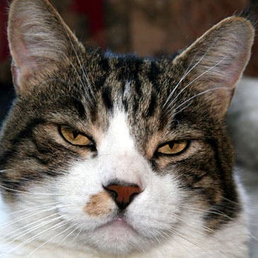 Who's in charge – you or your cat?