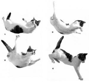 The secret of cats' nine lives