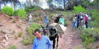 GREEN British volunteers help protect Sierra de las Nieves e
