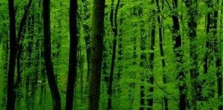 GreenForest e