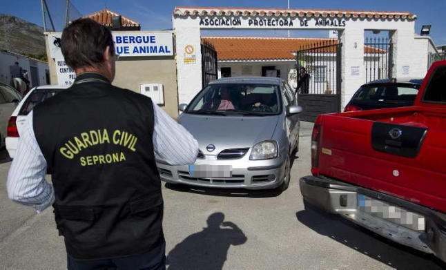 Torremolinos animal shelter bosses to be charged with cruelty
