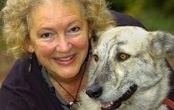 chris thornton nurse german shepherd dog back to health alicante spain